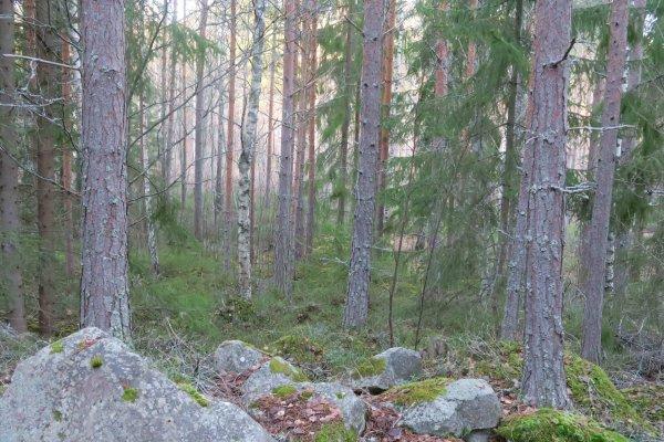 /naturstigen-uvberget-11b.jpg
