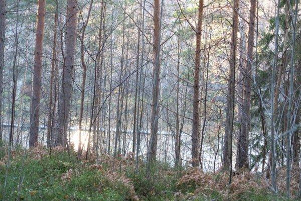 /naturstigen-uvberget-39.jpg