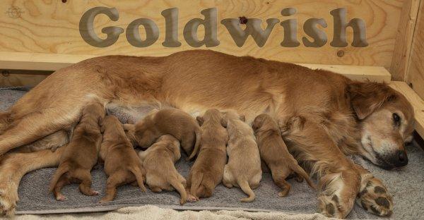 /goldwish.jpg