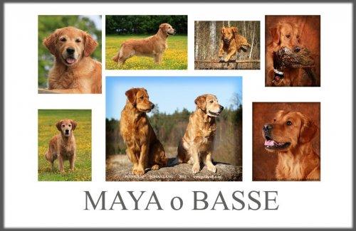 mayao-basse1.jpg