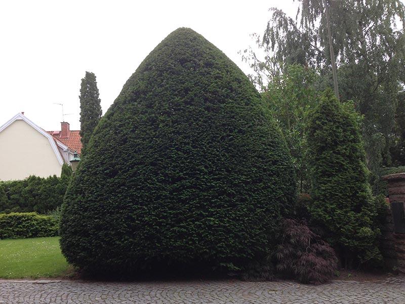 Fint beskärd buske utav Greenwelle