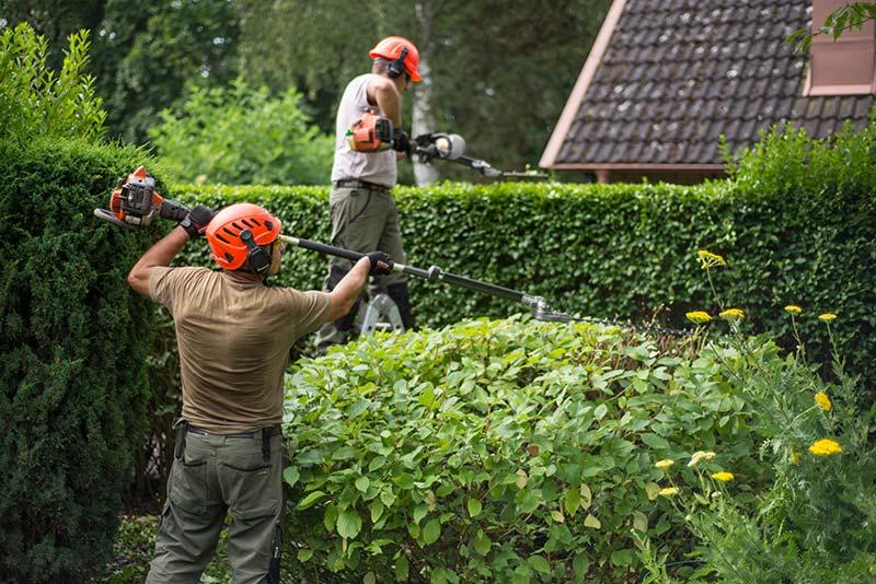 Trimmning av buske