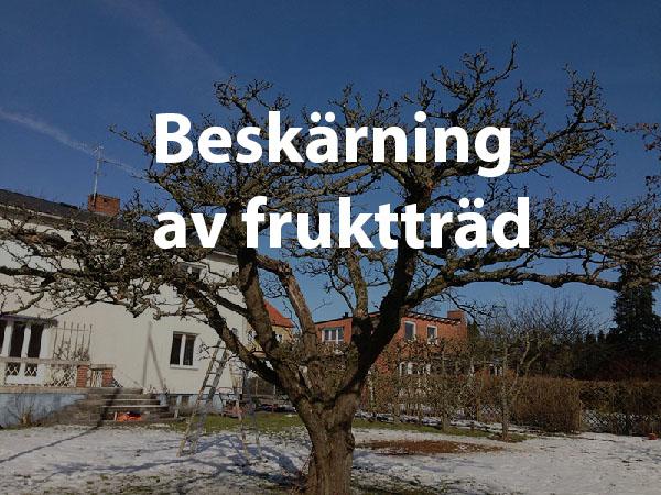 Klippt fruktträd