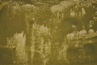 /dsc-0049.jpg olivgrönt