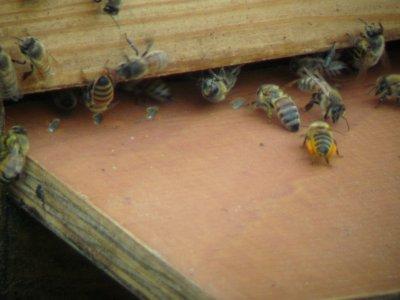 bi-med-pollenborda.jpg