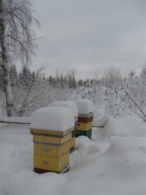 kupor-i-vinterskrud.jpg