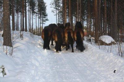 /7-i-vinterskog-feb2015-rumpor.jpg