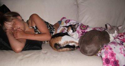katternasover.jpg