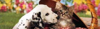 /dalmatian-dog-and-cute-little-kitten-web-header.jpg