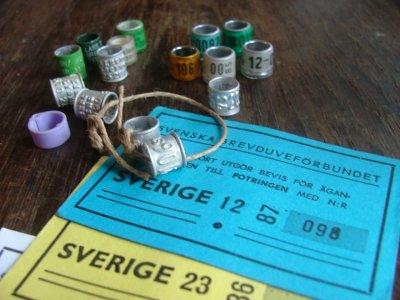 Olika tidsåldrar på namn och fotringar, äganderättskort