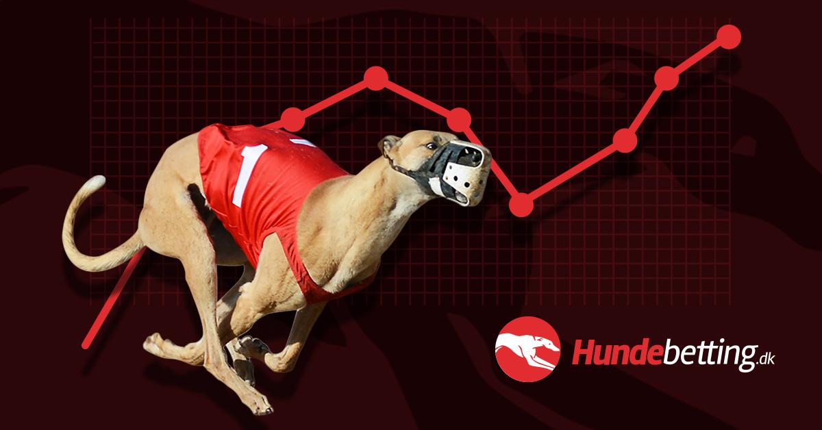 hundevæddeløbsbaner