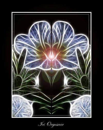 fractalius-blomma1.jpg
