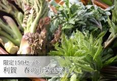 限定150セット 利賀 春の山菜セット