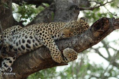 /leopard.jpg
