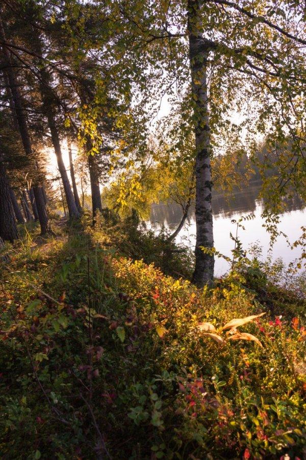 hösten i skogen