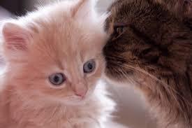 Att Skaffa Katt Som Husdjur Jonnaa Se