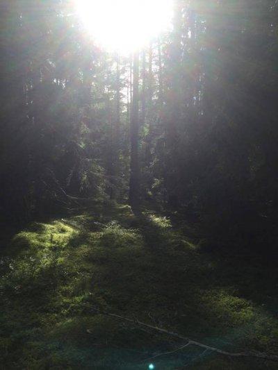 /skog-solljus.jpg