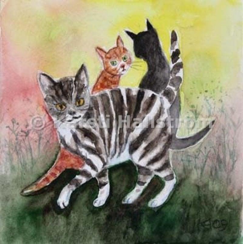kattskvaller-liten.jpg