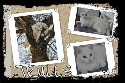 trulls.jpg