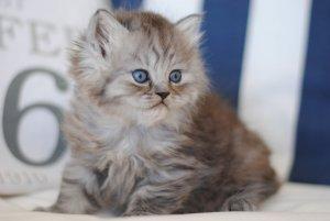 hur länge växer en katt