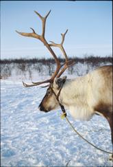 Foto: Dagny Margrethe Øren/Finnmark Tourist Board
