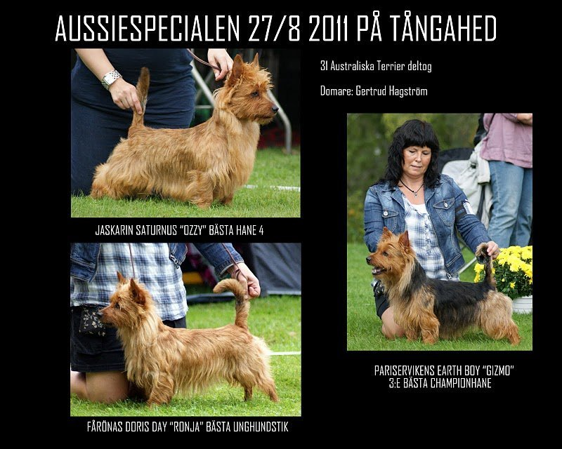2011-08-28-collage-aussiespecialen-2011.jpg