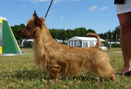 /nordic-terrier-och-koping-041.jpg