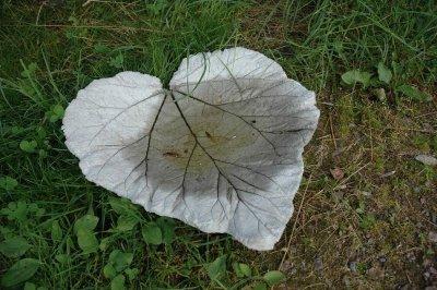 rabarberblad-i-beton.jpg