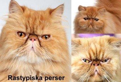 istock3perser1.jpg