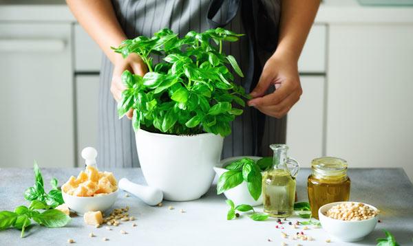 växter i köket - basilika