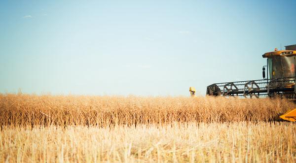 bönder riskerar konkurs