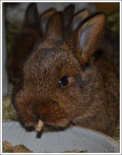 allergi mot kanin symptom