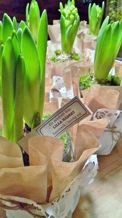 /hyacinter.jpg