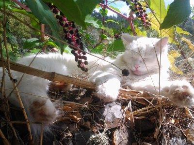 /white-cat.jpg