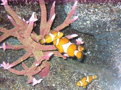 underwaterworld2.jpg