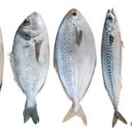Tag med ud og fisk – Del 1