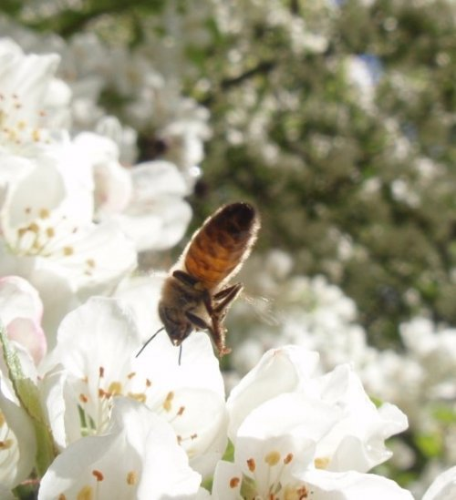 Insekt kön videor