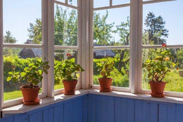 Fönster ut mot trädgård med krukor på fönsterbrädan