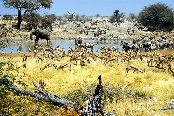 Etosha Namibia