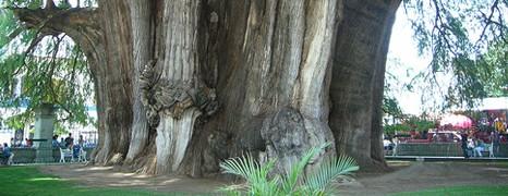 4 bijzondere bomen