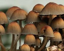 Vind je eigen eten: paddenstoelen zoeken