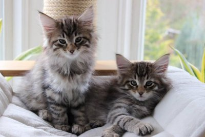 /kitten.jpg