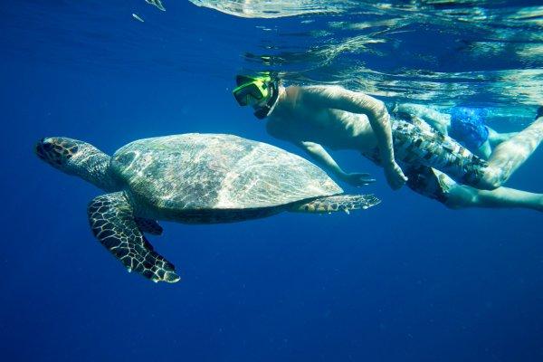 Simma med sköldpadda