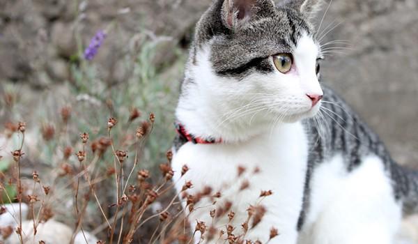 Alle katter bør id-merkes. Katter kan gå langt, og det desverre ikke alltid at de klarer å finne hjem på egenhånd. Ved å id-merke dyret øker du sjansene for at du får tilbake katten din dersom dette skulle skje.