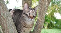 Å kastrere katten din, er det viktigste du kan gjøre, både for din egen katt, og for å redusere antallet hjemløse katter. Det finnes mange fordeler med kastrering, både for deg og katten din.