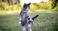 Dersom katten skulle bli syk eller skadet, kan utgiftene fort bli høye. Dersom katten din er forsikret behøver du kun å betale en egenandel. Det finnes mange sykdommer hos katter, som krever behandling. I tillegg løper utekatter alltid en risiko for å bli skadet eller påkjørt.
