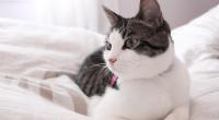Det skjer altfor ofte at katten må omplasseres eller avlives som følge av allergi i familien og dette er vondt for både familien og katten. Dette kan man til stor grad unngå ved å ta noen forhåndsregler før man går til anskaffelse av katt.