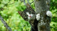 Dersom du har mistet katten din, eller funnet en katt du tror er bortkommen, er det flere ting du kan gjøre, for å øke sjansene for en lykkelig gjenforening. Her finner du også en liste over vanlige årsaker til at katter blir borte, slik at du kan ungå disse situasjonene så godt du kan.
