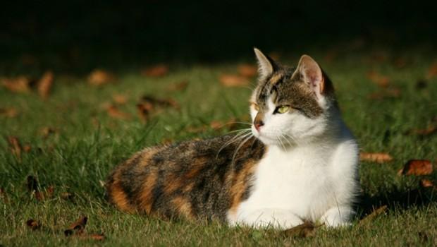 Vaksinering er en effektiv måte for å beskytte katten sin mot alvorlige sykdommer det ikke finnes effektiv behandling for. Man bidrar også til å holde smittepresset nede i kattebestanden der man bor.