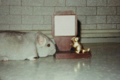 /mars1970chinchilla.jpg